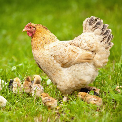 About the Farm | חוות החופש